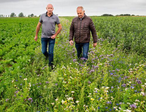 Boer wordt weer boer